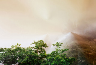 Response Print to Trees and Fog, California, Laura Plageman