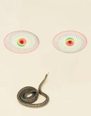 Snake (Eyes), Juliana Paciulli