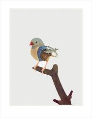 This Little Bird, Johnny Christ
