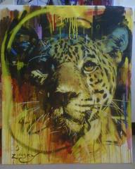 Jaguar, Zinsky
