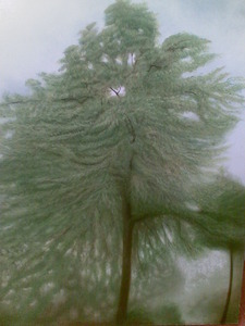 20120611111956-trees_in_arundel