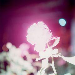 Untitled, from the series of Illuminance , Rinko Kawauchi