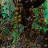 20120627131019-forestglow_pr_port