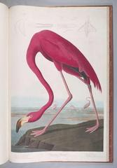 The Birds of America: from Original Drawings,John James Audubon