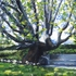 20120713052054-adamson_home_tree