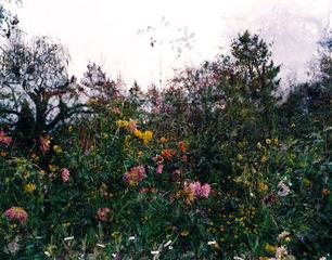 Horizontal Garden, Giverny, Sally Apfelbaum
