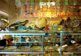 Image: Dana Levy, Florida Store, 2012,