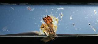 Bug, Dead,