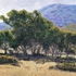 20120808001336-eucalyptus_grove