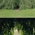 Treetree_dorit_sm