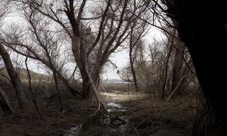 Fictions-Landscape series, Tressa Pack