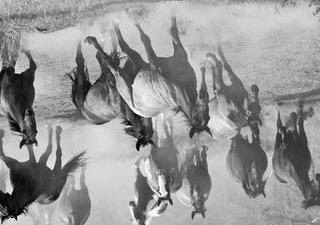Wild Horses, Joel Dean