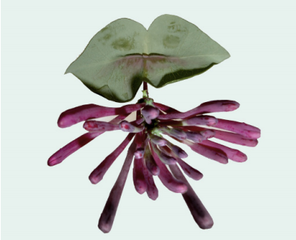 Botanical Slide Show,Rosemarie Trockel