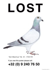 Lost Pigeons, Pilvi Takala