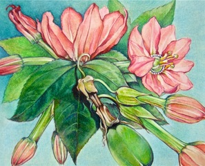 Fleur de Passion, Joseph S. Kohls