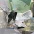 20120905064412-birds