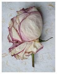 Nora\'s Rose, Jean Sousa