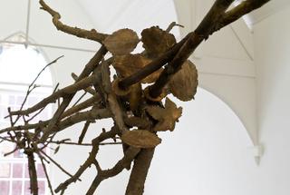 Pelle di foglie—sguardo incrociato (detail), Giuseppe Penone