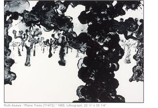 Plane Trees, Ruth Asawa