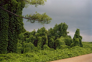 Kudzu with Storm Cloud, near Akron, Alabama,William Christenberry