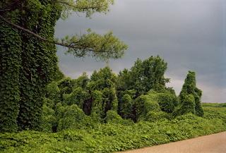 Kudzu with Storm Cloud, near Akron, Alabama, William Christenberry