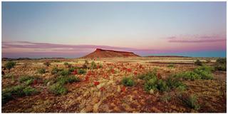 Brumby mound #6, Rosemary Laing