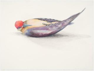 Redheaded Woodpecker, Lisa Dinhofer