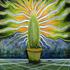 20121007113017-spidersinthecactus2res