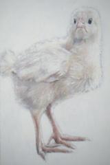 Chick, Hannah Hardy