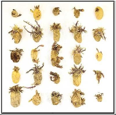 20121013190938-aardappelweb