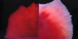 Genesis (Diptych), Sharon Weiner