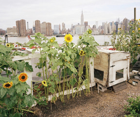 Eagle Street Rooftop Farm, Rob Stephenson