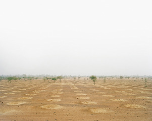 Adaptation and Mitigation LI: Reforestation and Land Restoration, Niger, The Canary Project