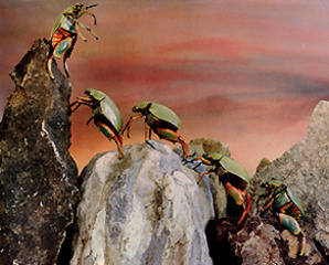 Glory from the Insect Series, Barbara Norfleet
