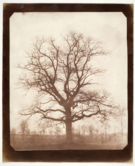 Oak Tree in Winter, Henry Fox Talbot
