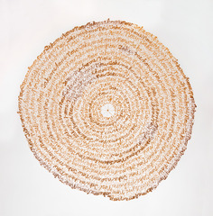 Record (Arboreal),Lisa Kokin