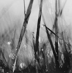 Scattered Light #1, David Akiba