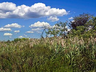 Grassy wetland at Brant Point along Jamaica Bay in Rockaway, Queens, Roger Generazzo