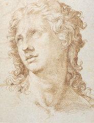 Male Head, Bartolomeo Passerotti