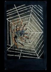 La Arana (The Spider), Fernando Sanchez Aceves