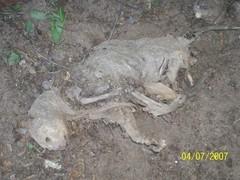 20121114030518-mummycatshouseeaster2006