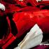 20121115191407-snuggle-snore-_detail__lumir_hladik