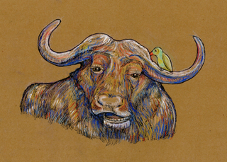 Happy Buffalo,Jasmine Parker