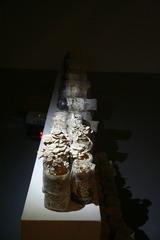 Healing Mushroom (installation view) , Pei Li
