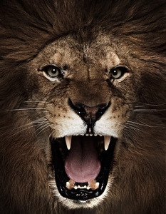 20121130005137-lion_growl