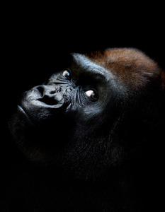 20121130005701-gorilla