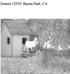Sonnet 12534, Bruce Barton