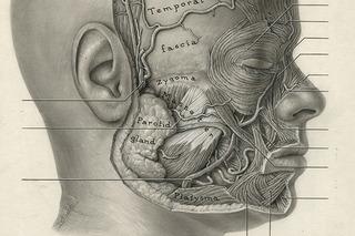 Head (detail), Dorothy Foster Chubb