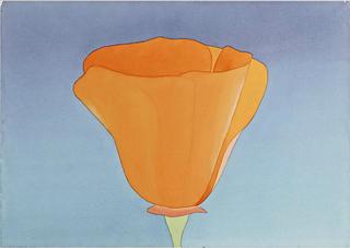 California Poppy, Mark Adams
