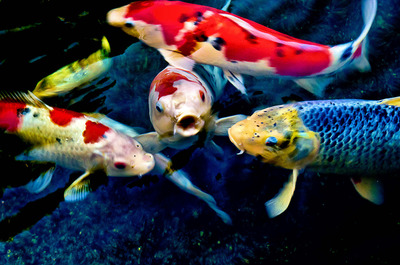 20121214143010-koi_quartet